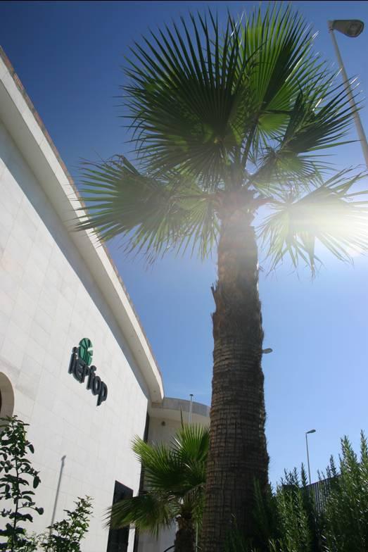 Palma davanti alla sede