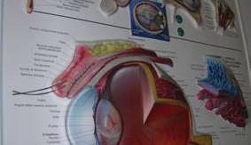 Cartello illistrativo dell'occhio